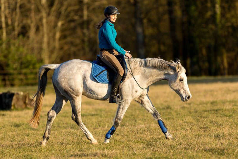 Gabi Neurohr Horse Training - Control the gait