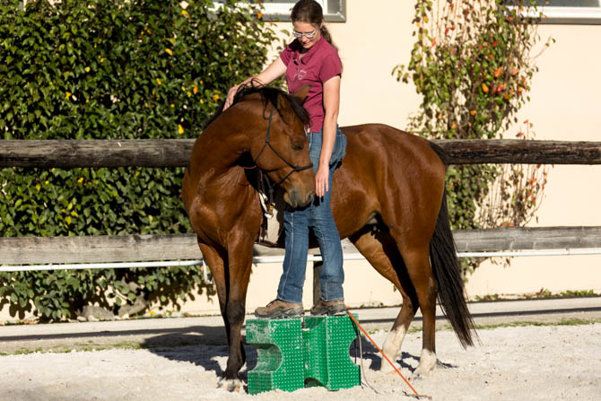 Gabi Neurohr Colt Starting - mounting block hugging station