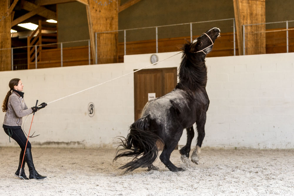 Gabi Neurohr Problem Horses - Horse is pulling on the rope