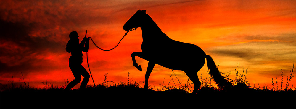 Gabi Neurohr with rearing horse as silhouette in colourful sunset