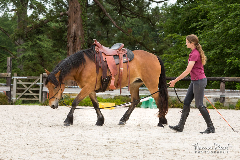 Gabi Neurohr Horse Training - Kanna learns to stretch
