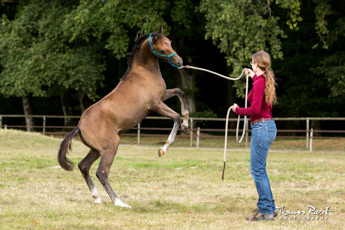 Gabi Neurohr Young Horse Training - leading a foal
