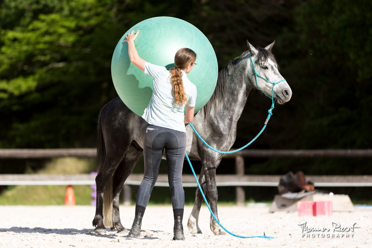 Gabi Neurohr Problem Horses - Aslan for the first time in our riding arena