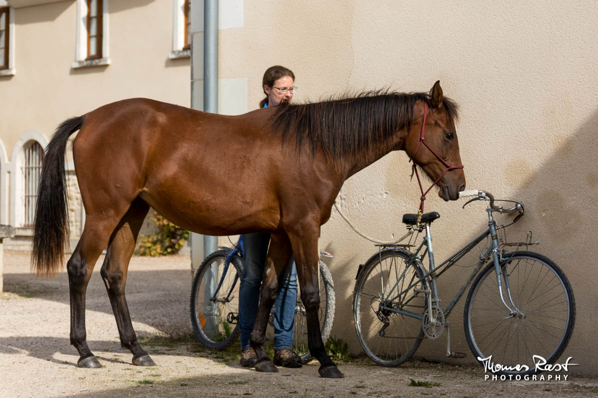 Gabi Neurohr Young Horse Education - Shagya filly Tara investigates a bike