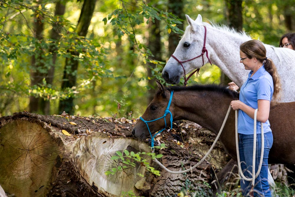 Gabi Neurohr Young Horse Training - foal Maserati explores a log