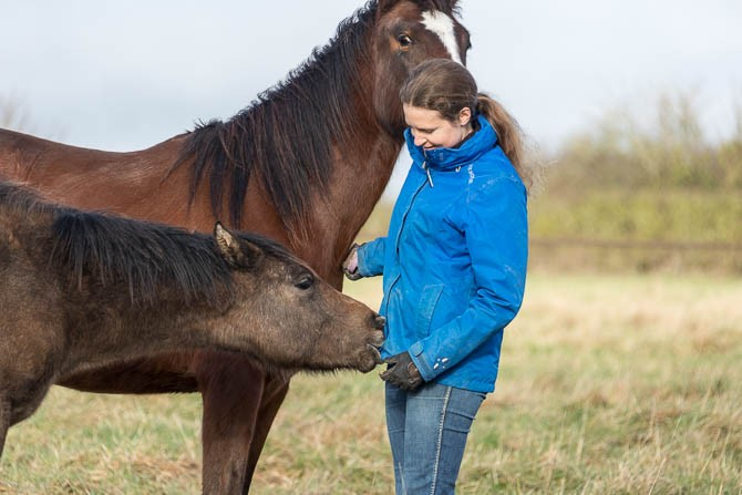 Gabi Neurohr Young Horse Education - a foal is biting in Gabis pocket