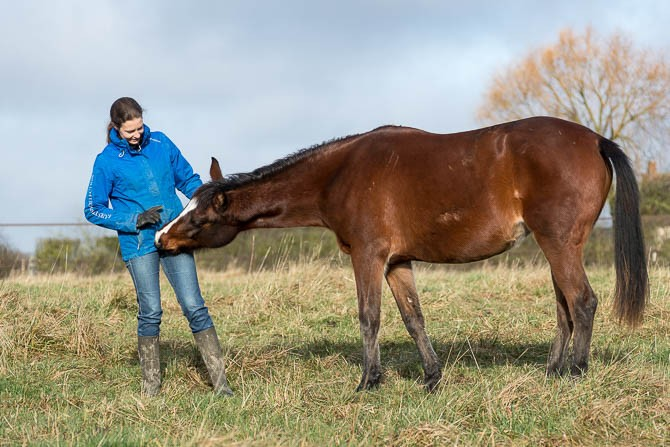 Gabi Neurohr Young Horse Education - a brown foal is looking inside Gabis pockets