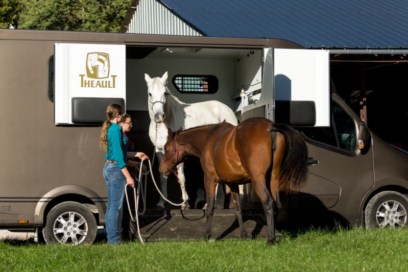 Gabi Neurohr young horse education - an old horse demonstrates how to load in the truck to a foal